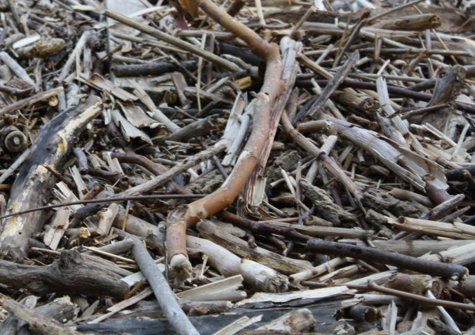 A Picture of Sticks
